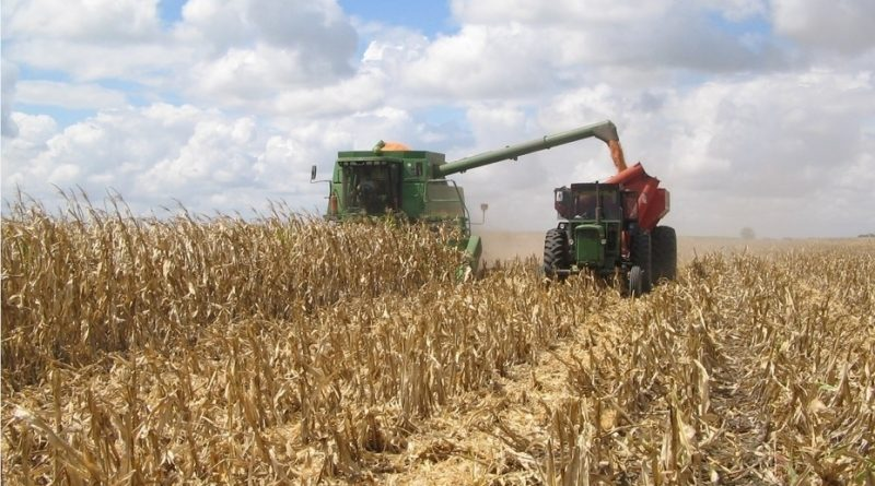 Cosecha récord de 147 millones de toneladas en la campaña agrícola 2018/19