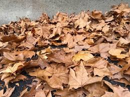Campaña de embolsado de hojas