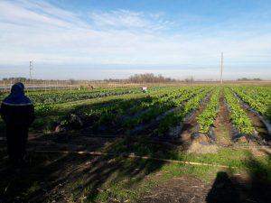 Promover las buenas prácticas agrícolas
