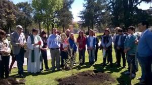 Plantaron olivo por la paz.