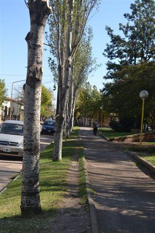 Tareas de poda correctiva de árboles en la Plaza General Paz.