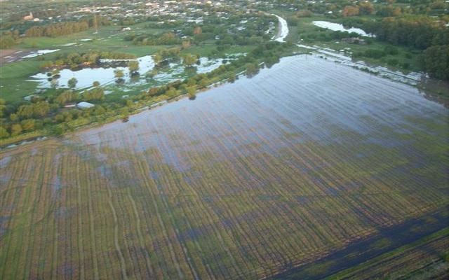 Imagen que corresponde a campo situado entre vías del ramal a Arribeños y Ruta Provincial 42. Foto gentileza: Ubaldo Demattei.
