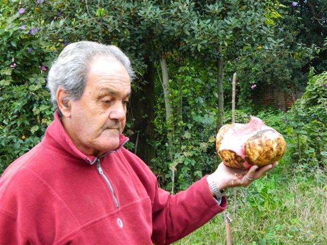 Otra muestra de la batata cosechada en Rawson con un peso de 2,800 kg.