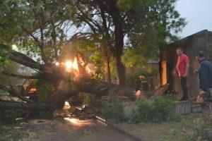 Imagen del lugar dónde cayó el árbol.
