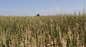 Cinco millones de toneladas de maíz y otro tanto de soja ya se perdieron como consecuencia de la sequía.