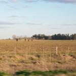 Es por el desmedido aumento del impuesto inmobiliario rural.