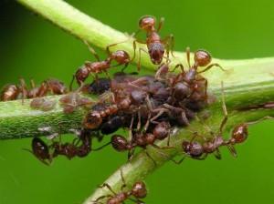 Las hormigas cambian de trabajo a medida que crecen.