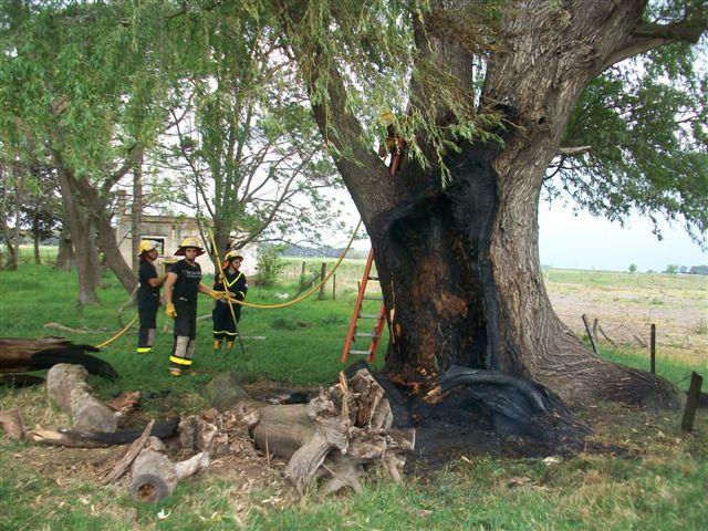 9/10/13- A las 15.03 horas de hoy, los Bomberos Voluntarios debieron trasladarse hasta el campo propiedad de Walter Noon, ubicado en el kilómetro 148.500 de la Ruta Provincial 51 y a unos 7.000 metros del casco urbano de Rawson, por el incendio de un árbol.