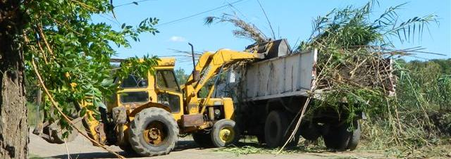 Maquinarias del municipio realizando tareas de desmalezamiento en avenida Mitre.