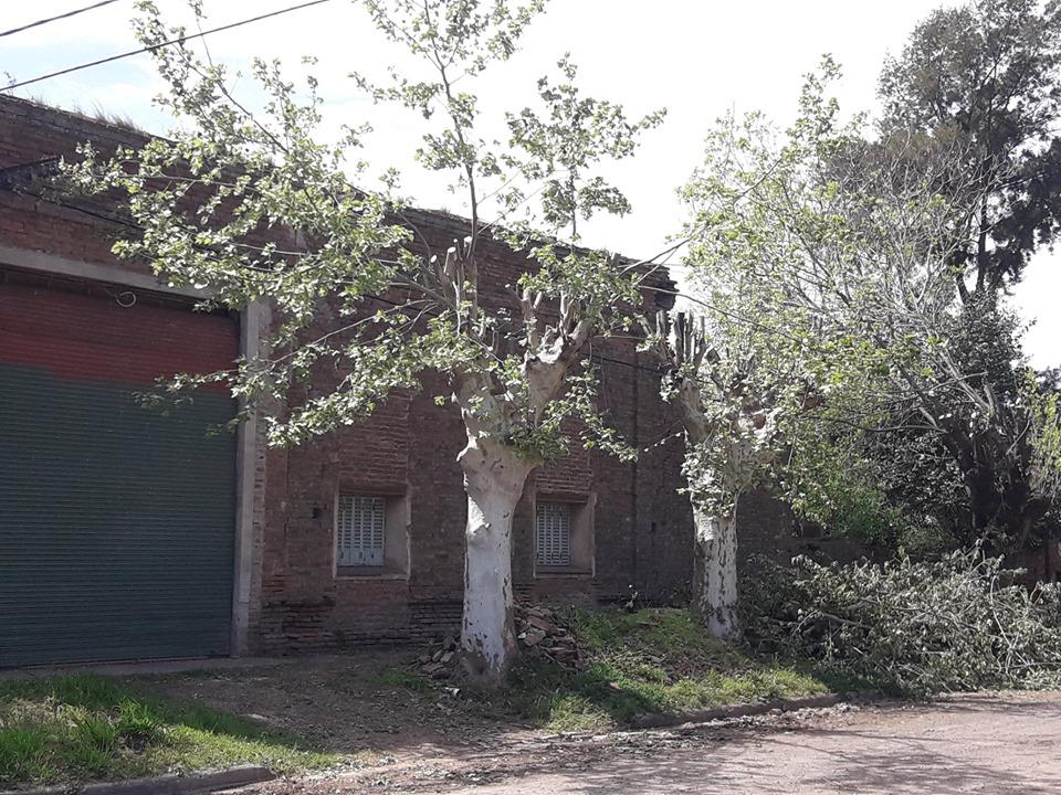 Poda de árboles en Rawson molestó a frentistas