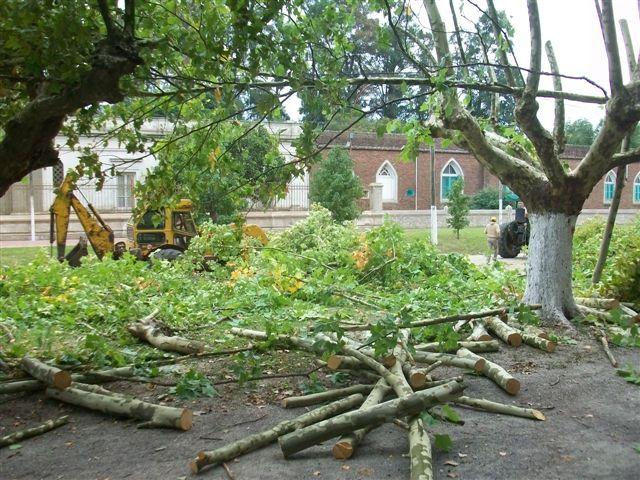 Otra imagen de los trabajos de poda en la Plaza Principal de Rawson.