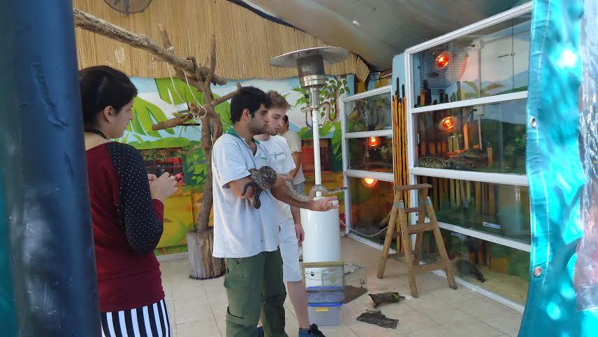 13.3.14- El martes 11 pasado, personal de Defensa Civil traslado al Zoológico de Lujan a la Serpiente (Lampalagua Vizcachera) que se encontró días atrás en la ciudad de Chacabuco. Se decide llevarla a un zoológico donde va a ser cuidada y tratada por personal idóneo.