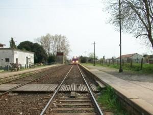 El concejal Felice pide por restitución de frecuencias del Tren de Pasajeros.