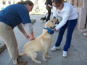 La Dra. Paula Pinard vacunando uno de los perros.