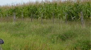 Crean un registro de control de granos que dependerá de la AFIP.