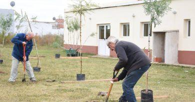 Programa Plantá tu Árbol