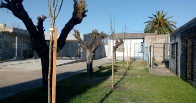 Nace un niño, nace un árbol: programa de forestación
