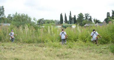 Limpieza de terrenos sobre Alberdi y Moreno